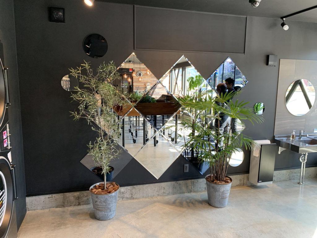 富士吉田市コインランドリー観葉植物